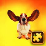 Funny Dogs Puzzle