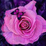 Purple Roses Puzzle
